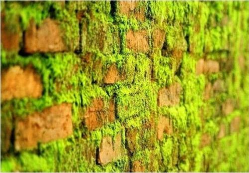 Rêu mốc bám trên tường làm mất vẻ đẹp mỹ quan