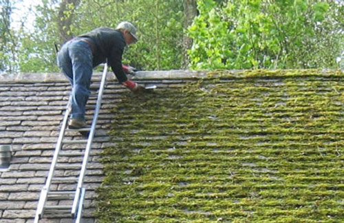 Cách tẩy rửa rêu mốc trên tường nhà hiệu quả
