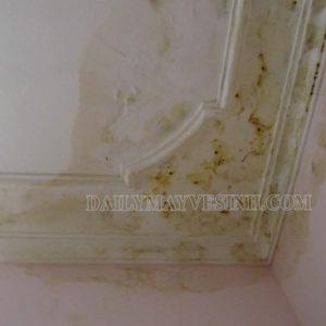 Mách bạn cách làm sạch tường nhà bị bẩn siêu sạch