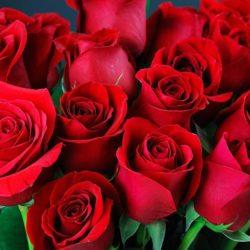 Hoa hồng: nguồn gốc, ý nghĩa và công dụng